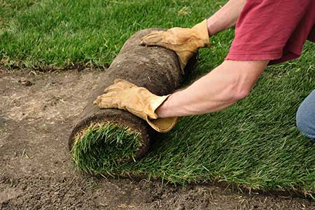 Lawn Installation and Repair/Sod
